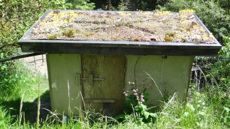 Living roof filters water for Chicken Coop rainwater system.