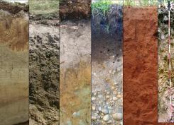 Soils_PICTURE